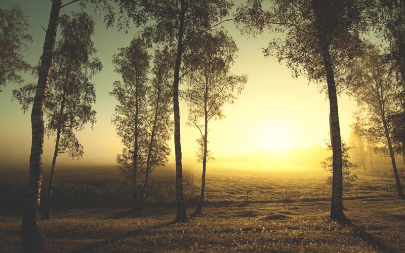 Hình ảnh phong cảnh bình minh mùa đông ven rừng