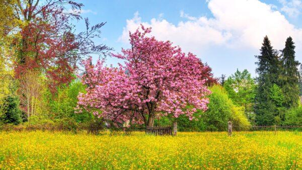 hình ảnh thiên nhiên phong cảnh đẹp (9)