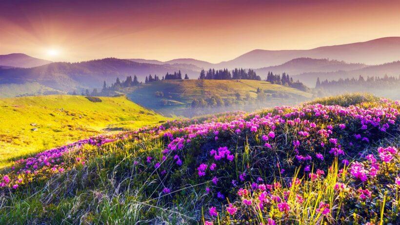 hình nền phong cảnh thiên nhiên hoa cỏ đẹp