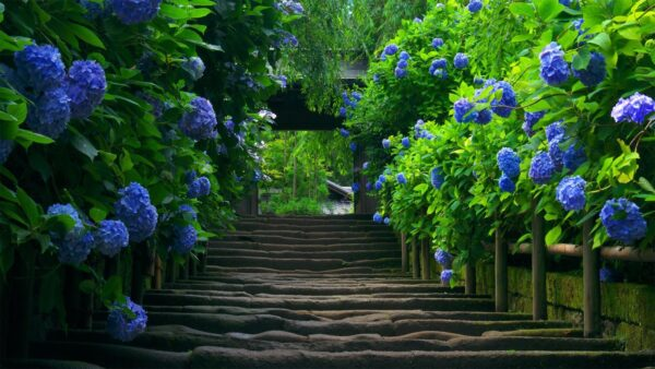 top hình ảnh thiên nhiên đẹp nhất thế giới (10)