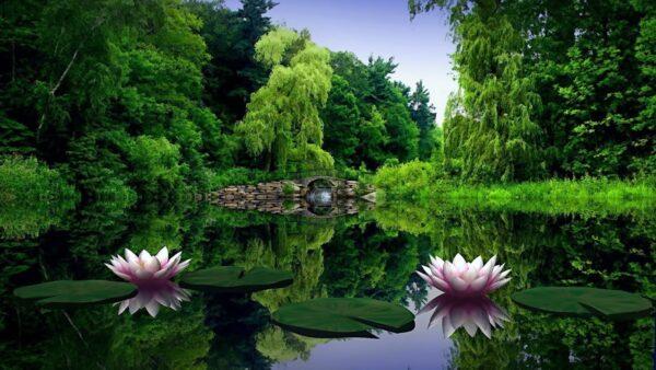 top hình ảnh thiên nhiên đẹp nhất thế giới (11)