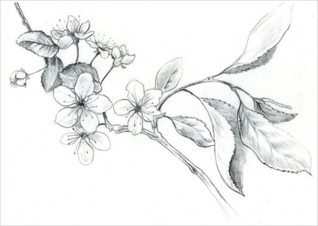 tranh vẽ bút chì hoa đào