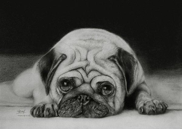 tranh vẽ con chó dễ thương bằng bút chì