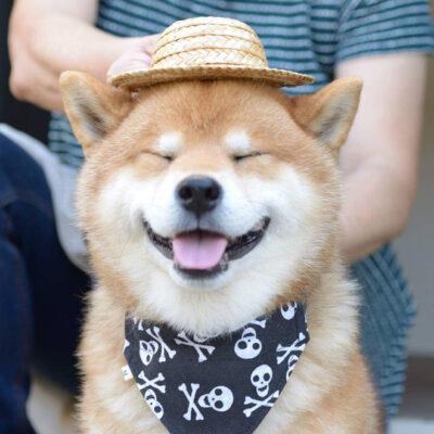 ảnh đại diện chó cute dễ thương