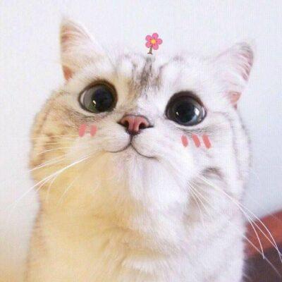 ảnh mèo làm dáng đáng yêu cute