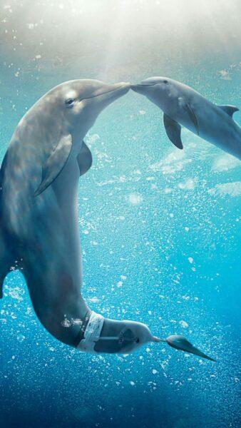 ảnh nền điện thoại cá voi