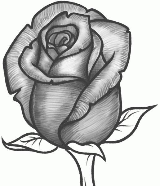 ảnh vẽ hoa hồng bằng bút chì đẹp và ấn tượng nhất