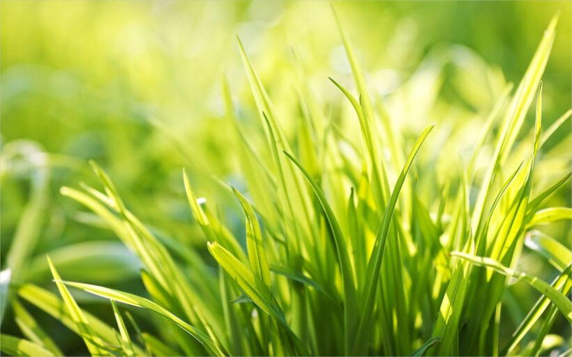 background đám cỏ xanh