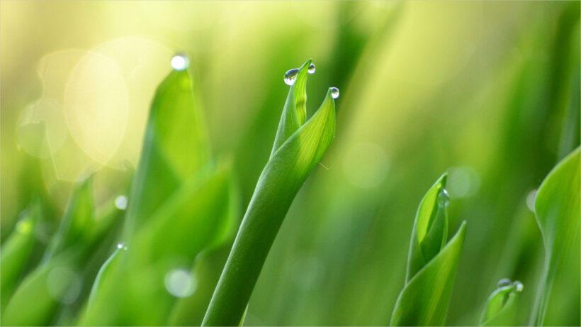 background for desktop green leaf full-HD