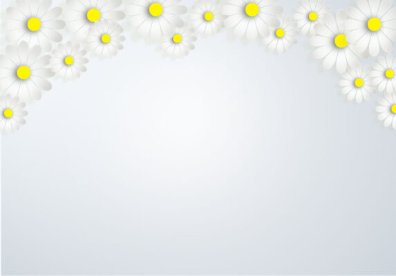 Background trắng hoa cúc