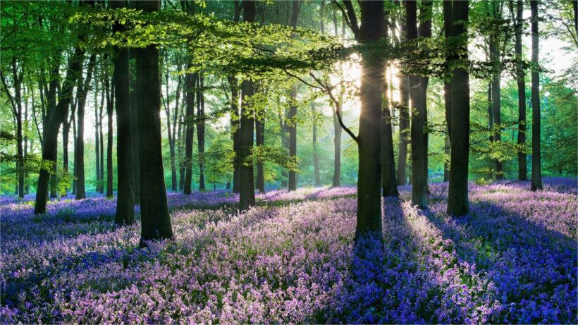 Background xanh lá thiên nhiên đẹp độ phân giải 2K
