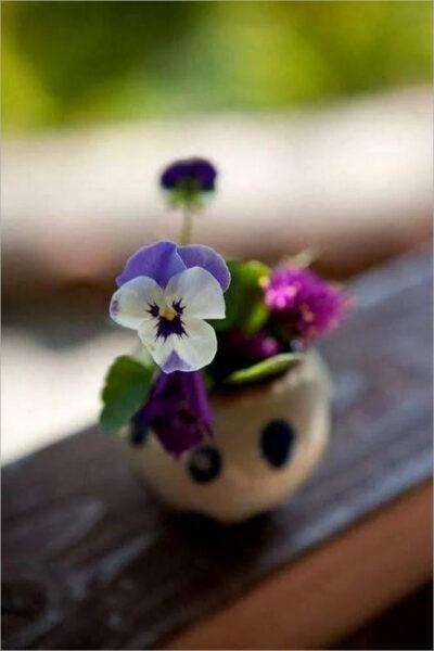 Hình ảnh cây hoa Păng Xê đẹp nhất và Ý nghĩa hoa Phăng (7)