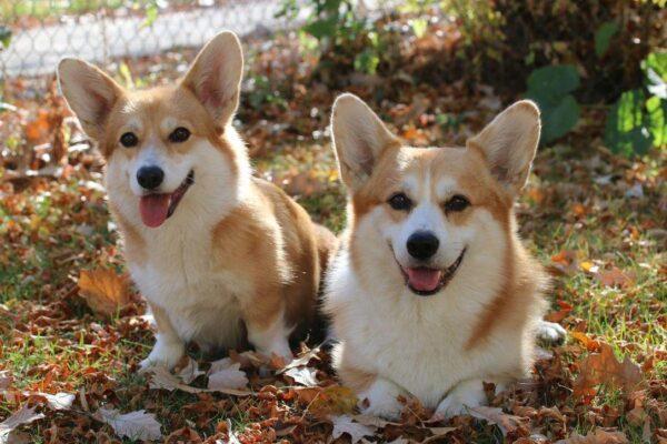 hình ảnh chó cute dễ thương