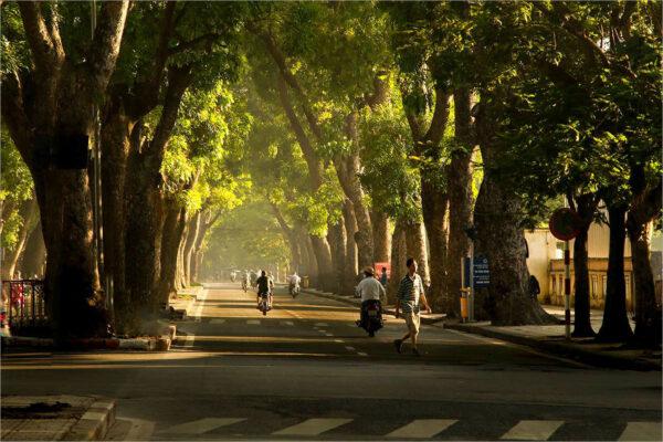 hình ảnh hà nội phố nắng đẹp chiếu qua rạng cây