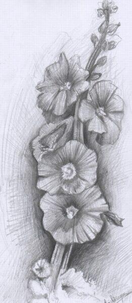 Hình ảnh hoa hồng vẽ bút chì đẹp ấn tượng nhất (1)