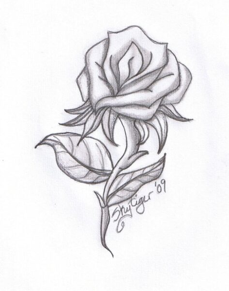 Hình ảnh hoa hồng vẽ bút chì đẹp ấn tượng nhất (11)