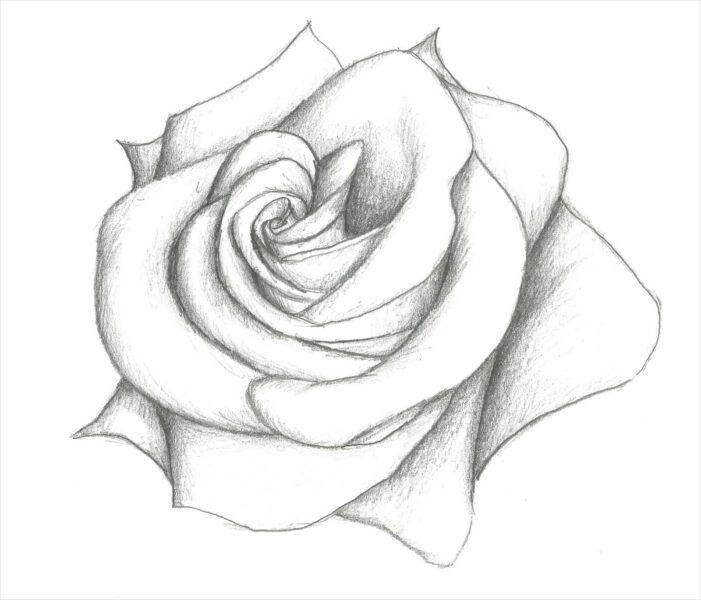Hình ảnh hoa hồng vẽ bút chì đẹp ấn tượng nhất (16)