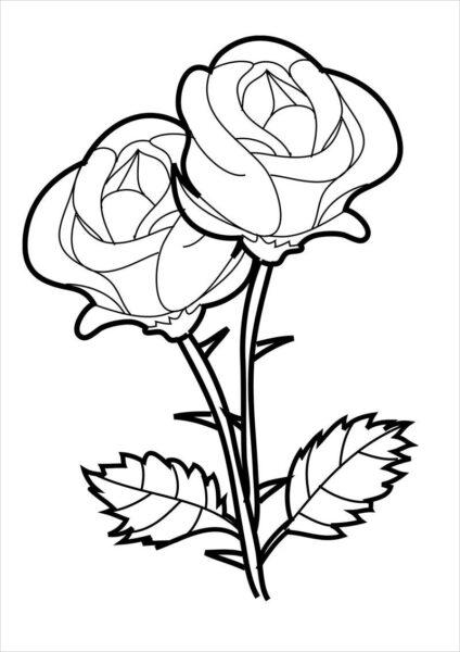 Hình ảnh hoa hồng vẽ bút chì đẹp ấn tượng nhất (17)