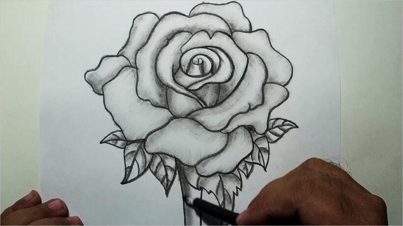 Hình ảnh hoa hồng vẽ bút chì đẹp ấn tượng nhất (18)