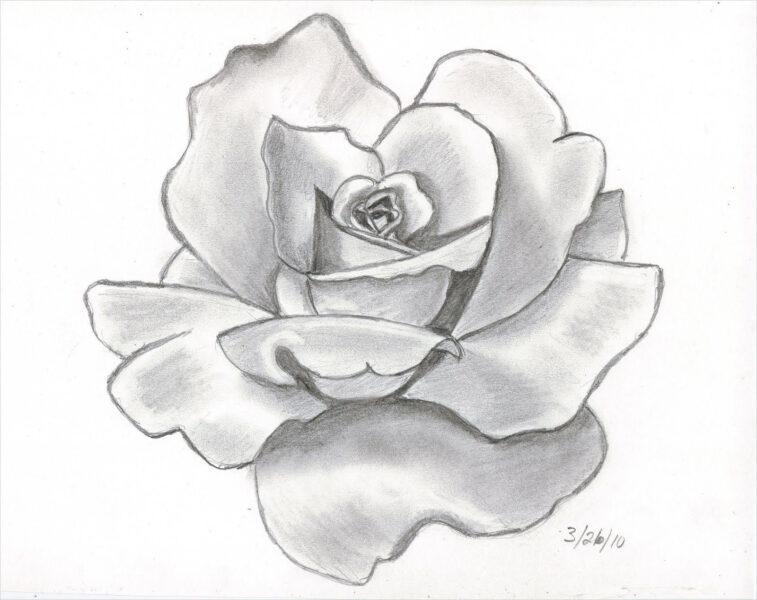 Hình ảnh hoa hồng vẽ bút chì đẹp ấn tượng nhất (19)