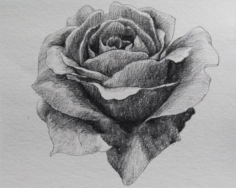 Hình ảnh hoa hồng vẽ bút chì đẹp ấn tượng nhất (21)