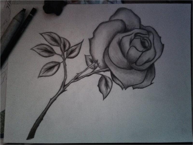 Hình ảnh hoa hồng vẽ bút chì đẹp ấn tượng nhất (24)