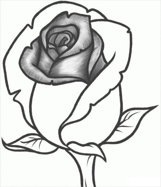 Hình ảnh hoa hồng vẽ bút chì đẹp ấn tượng nhất (25)
