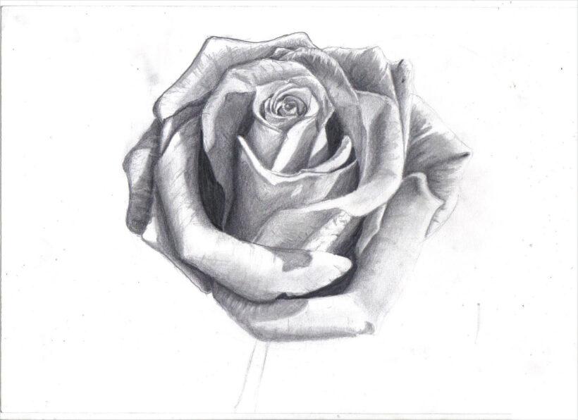 Hình ảnh hoa hồng vẽ bút chì đẹp ấn tượng nhất (26)