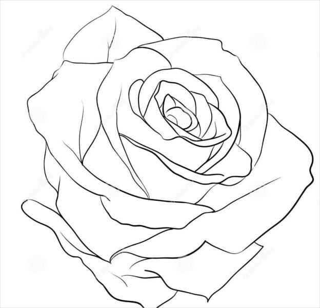 Hình ảnh hoa hồng vẽ bút chì đẹp ấn tượng nhất (28)