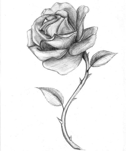 Hình ảnh hoa hồng vẽ bút chì đẹp ấn tượng nhất (31)
