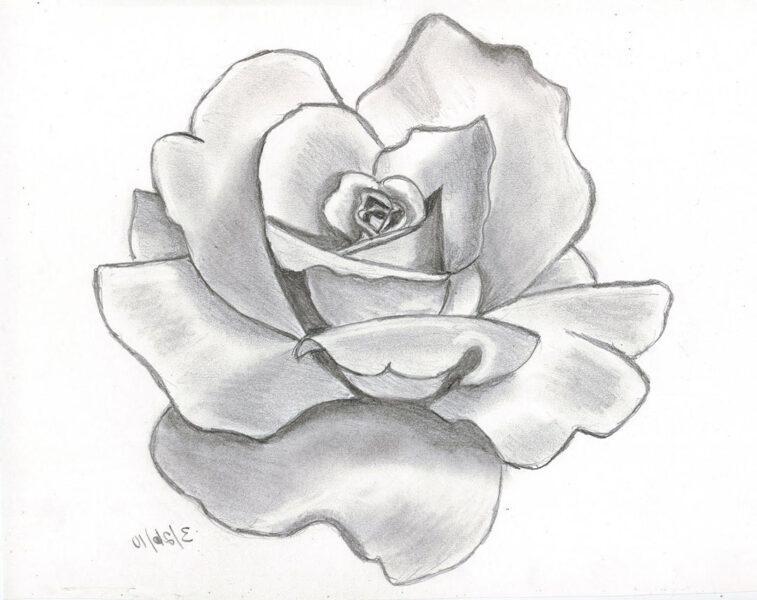 Hình ảnh hoa hồng vẽ bút chì đẹp ấn tượng nhất (32)