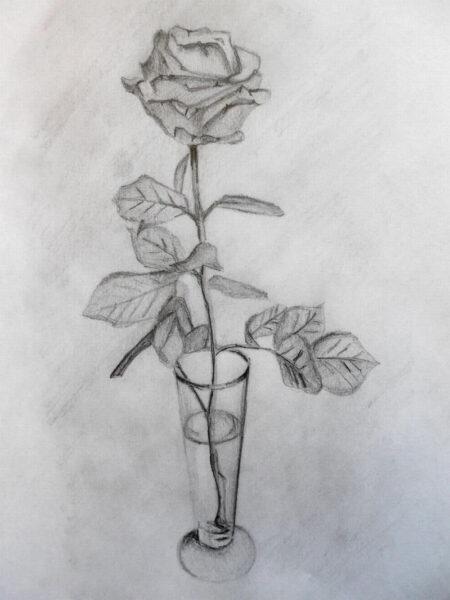 Hình ảnh hoa hồng vẽ bút chì đẹp ấn tượng nhất (5)