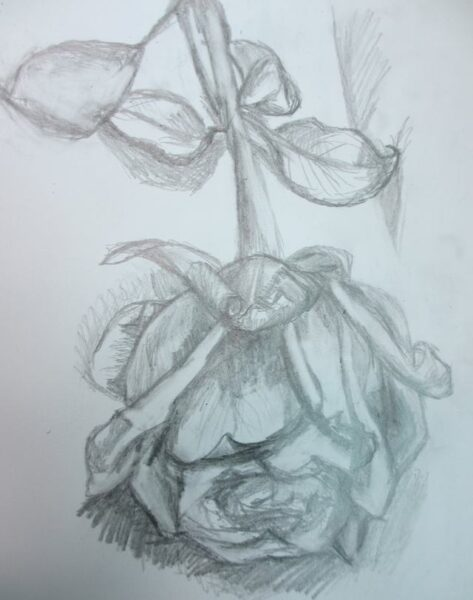 Hình ảnh hoa hồng vẽ bút chì đẹp ấn tượng nhất (7)