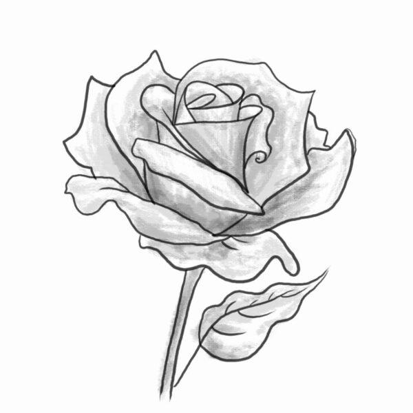 Hình ảnh hoa hồng vẽ bút chì đẹp ấn tượng nhất (9)