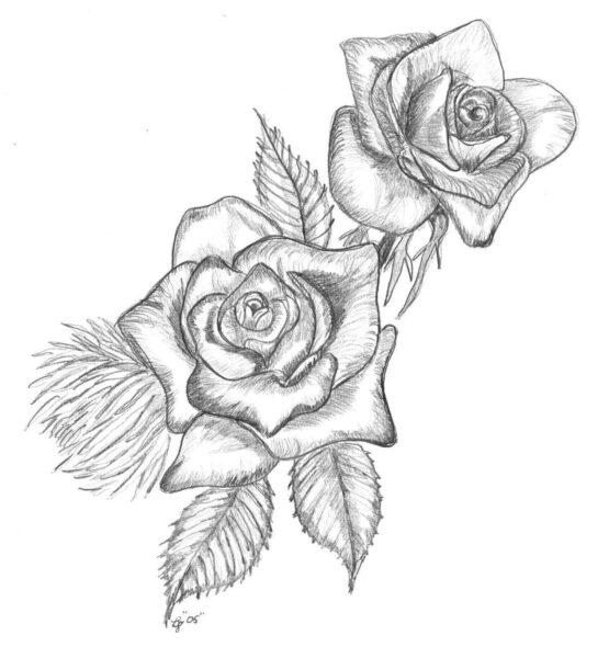 Hình ảnh hoa hồng vẽ chì đẹp nhất
