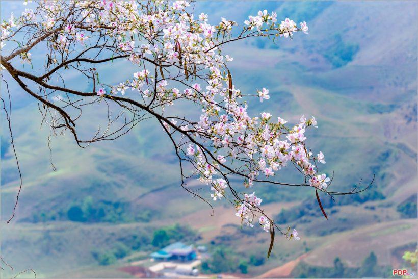 Hình ảnh hoa mùa xuân tươi đẹp