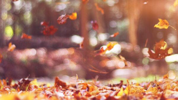 hình ảnh mùa thu đẹp cho desktop