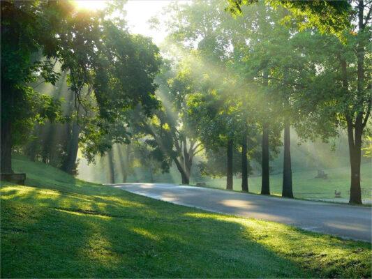 hình ảnh nắng chiếu công viên cực đẹp