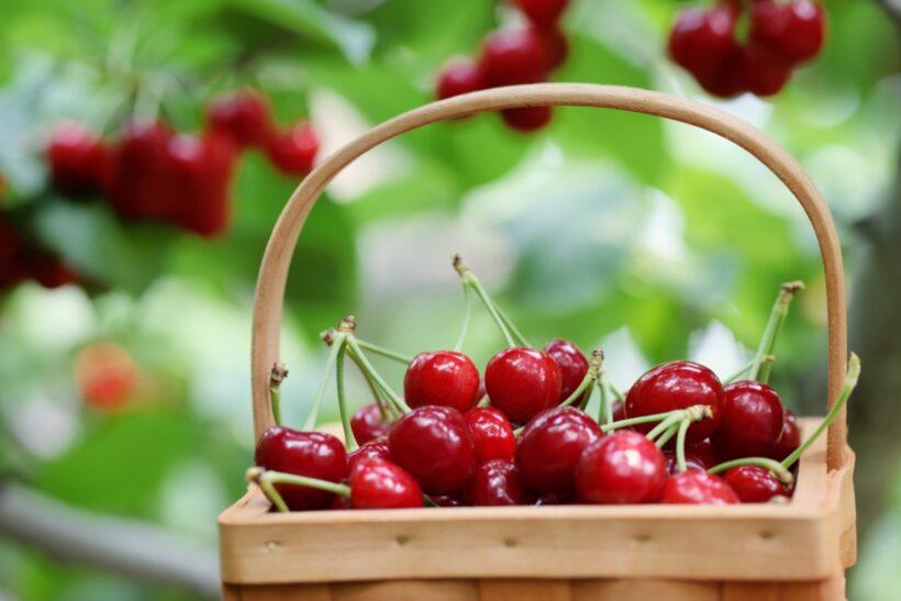 hình ảnh quả cherry đẹp nhất (5)