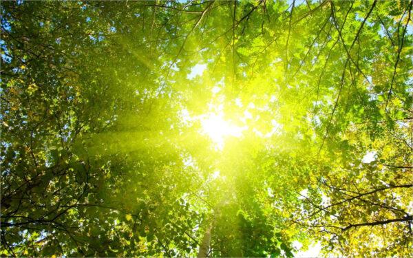 hình ảnh tia nắng xuyên qua tán cây đẹp