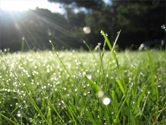 hình ảnh trời nắng và giọt sương sớm trên lá cỏ