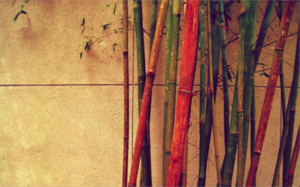 hình ảnh Vintage đẹp những cây tre và trúc