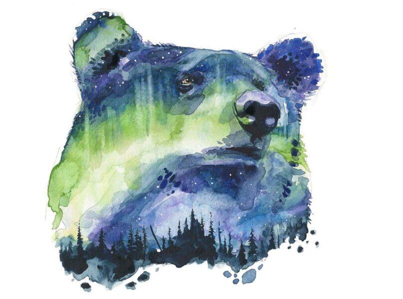 hình đại diện gấu