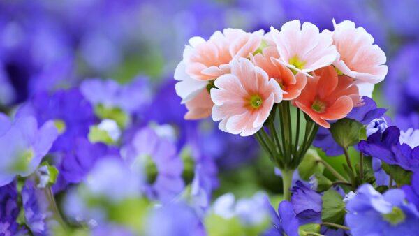 hình nền 4k chùm hoa đẹp nhất