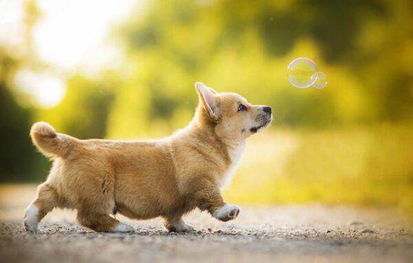 hình nền cute dễ thương cún yêu