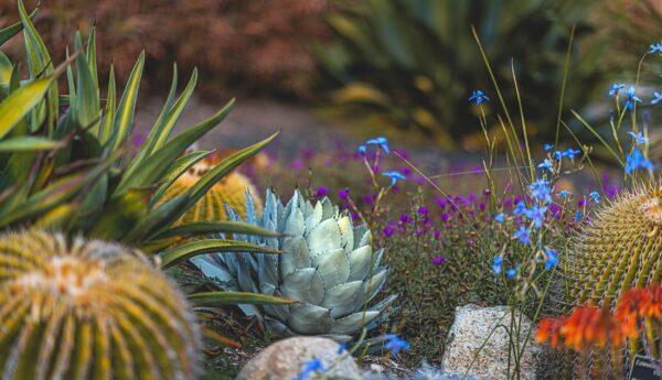 hình nền desktop hoa cỏ tuyệt đẹp
