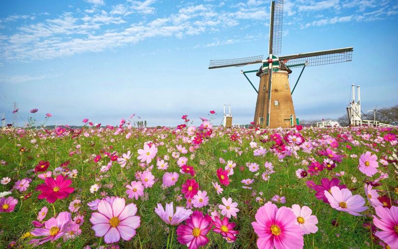 hình nền hoa cúc chuồn mùa xuân Full-HD