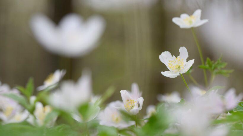 hình nền hoa đẹp mùa xuân