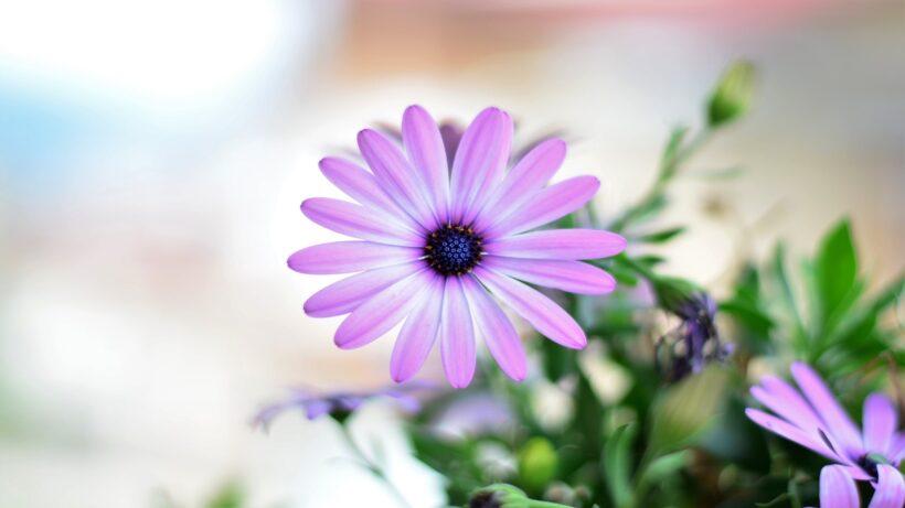 hình nền hoa đẹp nở mùa xuân