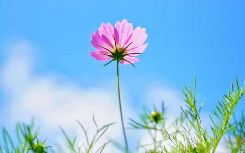 hình nền hoa mùa xuân tươi đẹp rạng ngời 4k